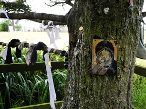 Sacred Tree, Saint Brigid's Well, Kildare, July 2011