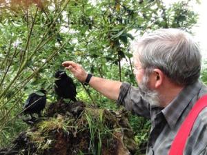 ©2014 Janet Maher, Alfie , feeding his rooks