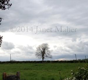 ©2014 Janet Maher, Cashel Tree