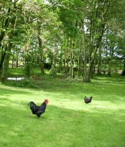 ©2014 Janet Maher, Old Farm, Lorrha, Tipperary